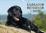 Labrador Retriever 2022 (Wandkalender 2022 DIN A3 quer)