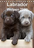 Labrador Welpen (Tischkalender 2022 DIN A5 hoch)