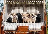 Liebenswerter Labrador 2022 (Tischkalender 2022 DIN A5 quer)
