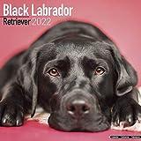 Black Labrador Retriever - Schwarzer Labrador 2022- 16-Monatskalender: Original Avonside-Kalender [Mehrsprachig] [Kalender] (Wall-Kalender)