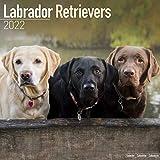 Labrador Retriever 2022 - 16-Monatskalender: Original Avonside-Kalender [Mehrsprachig] [Kalender]: Original BrownTrout-Kalender, mit freier DogDays-App (Wall-Kalender)