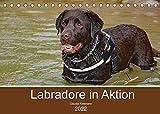 Labradore in Aktion (Tischkalender 2022 DIN A5 quer)